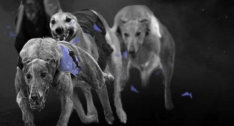Bet365 Greyhounds Best Odds Guaranteed