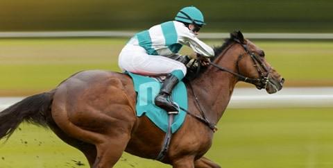 Novibet Horse Racing Insurance